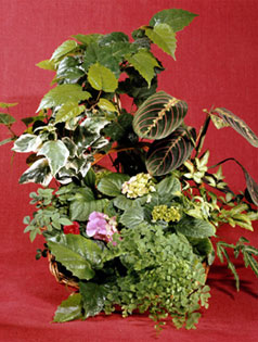 Tropical plants arrangement