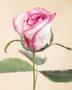 Make This Silk Rosebud