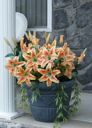 Urn of silk flowers on porch