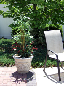 Silk bamboo plant on patio