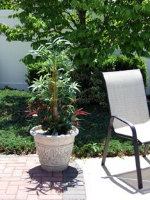 Silk bamboo plant on patio